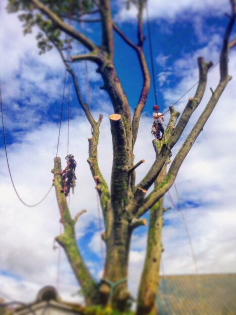 About Ambleside Tree Services